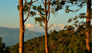 ranikhet by tempo traveller