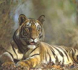 bandhavgarh by tempo traveller