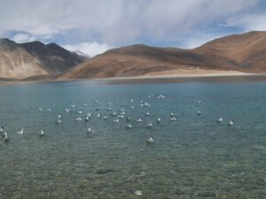 leh by tempo traveller